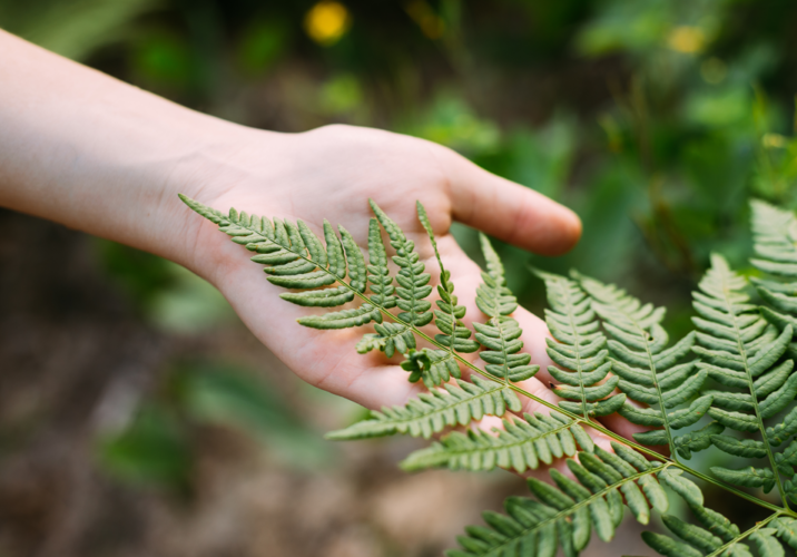 young-girl-touching-holding-fern-leaf-in-summer-pa-PG2H2NM